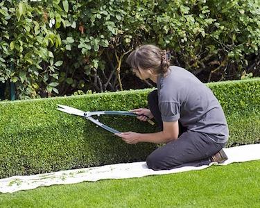 Heckenschneiden beim Gartenservice